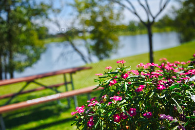 Flowers at Hidden Lake Park in Merrillville, Indiana