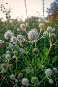 Flowers at Hoosier Prairie in Schererville, Indiana