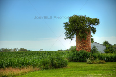 Silo with Tree in Winfield, Indiana