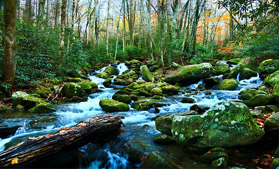 Smoky Mountains National Park. A mossy brook runs through a valley in the Smoky Mountains National Park.