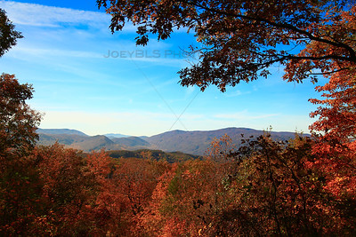 Red Leaves During Fall in Smoky Mountain National Park