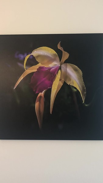 Midnight Yellow Orchid