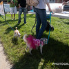 Pufferbilly Days Pet Show