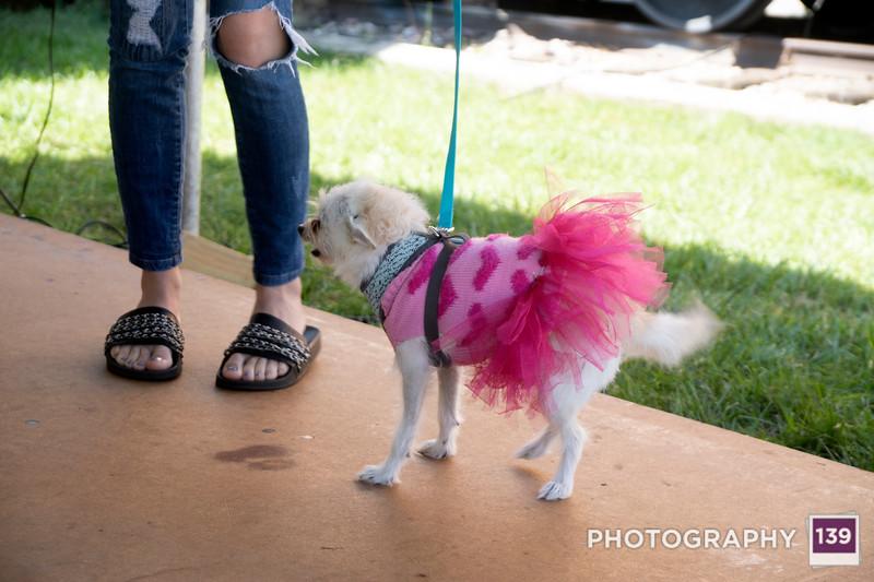 Pufferbilly Days Pet Show