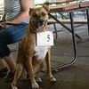 Pufferbilly Days Pet Contest - 2017