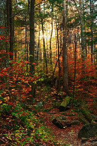 Scene from the trail leading to Grotto Falls in Smoky Mountains National Park near Gatlinburg, Tennessee. Beautiful fall colors of reds, yellows and greens can vividly be scene throughout the Smokies in late October.