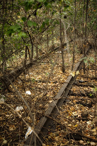 Abandoned Railroad Tracks with Overgrowth
