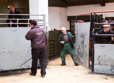 Leyburn Auction Mart Jan 2020 (104)