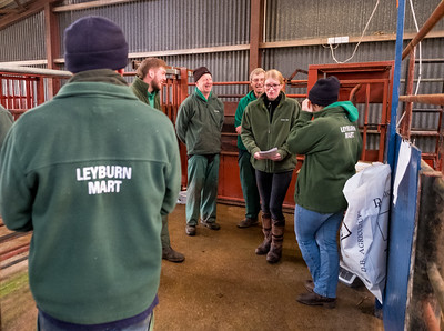Leyburn Auction Mart Jan 2020 (8)