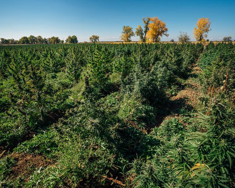 Seed2System Harvest Shoot October 2018