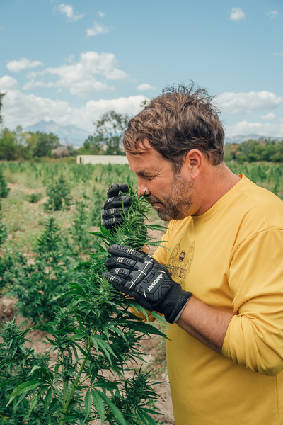 Seed2System Hemp | Green Tara Hemp Farm Photography and Video