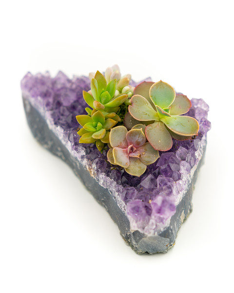 Product Photography | Succulents and Gemstones | Denver CO