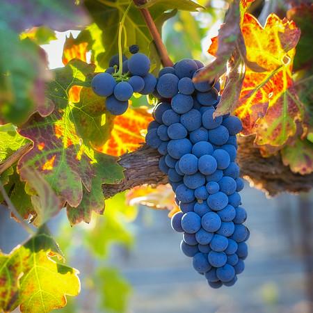 Bianchi Winery
