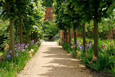 Iris walk, Tylney Manor, Hampshire