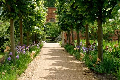 Iris walk, Tylney Manor, Hampshire
