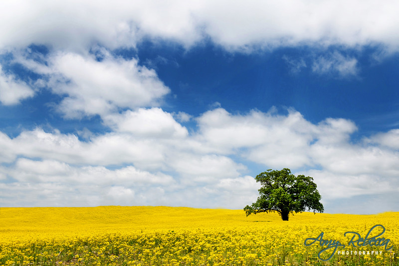 Yellow Happiness_Ohio_