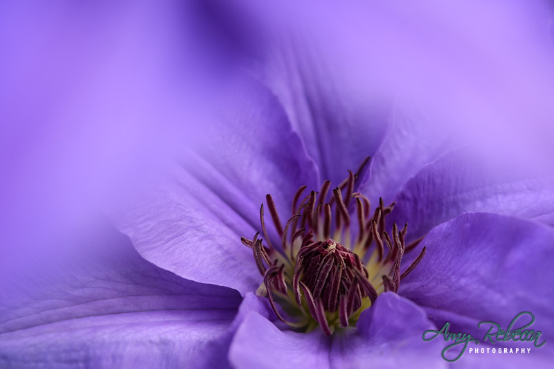 Purple Blur_Ohio_
