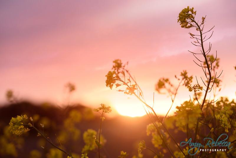 Spring Sunset_Ohio_