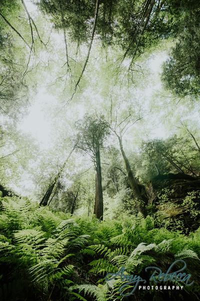 Green Goodness_Ohio_Hocking Hills_