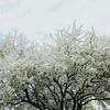 White Spring_Ohio
