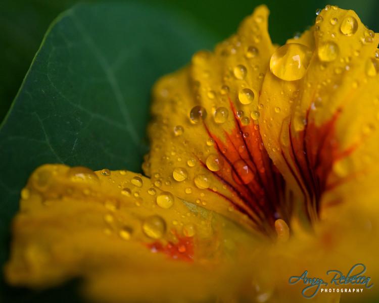 Morning Rain_