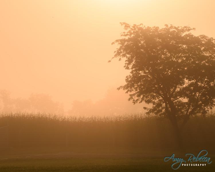 Peachy Haze_Ohio_