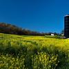 Yellow Farm_Ohio