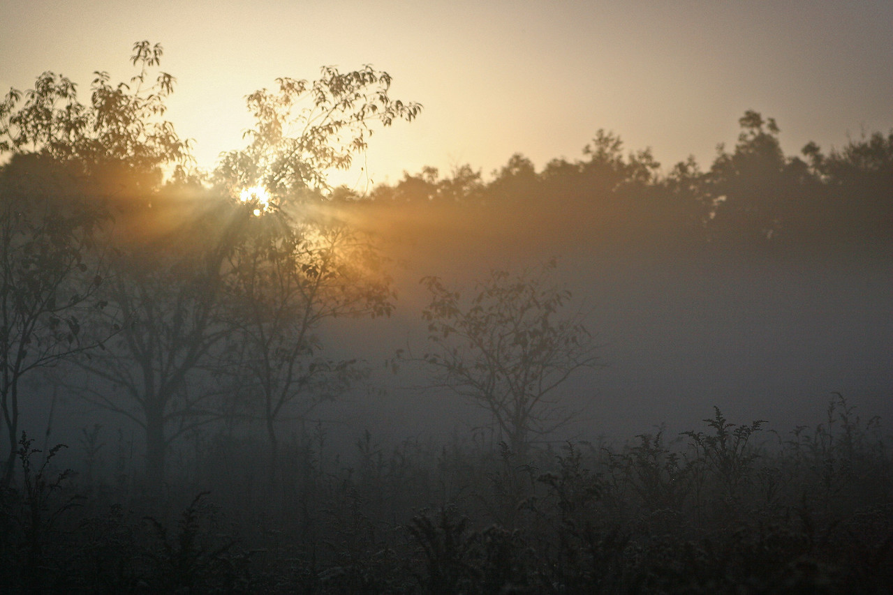 First rays of sun cutting through the early morning fog at Finzel Swamp