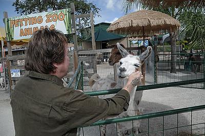 D3S_8178 Rick Derringer Llama