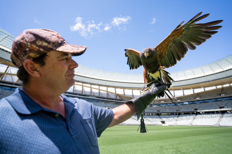 Hank Chalmers, the founder of Eagle Encounters, a birds of prey rescue and rehabilitation centre on the Spier Wine Farm, in Stellenbosch.