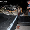 It was difficult for me to post this but I wish people would understand how hazardous it can be driving on Maine's highways at night. Moose collisions occur too frequently and yet people still speed.<br /> The front of this car has no damage. The main body of a moose is several feet above the ground which means the contact is with your windshield.....