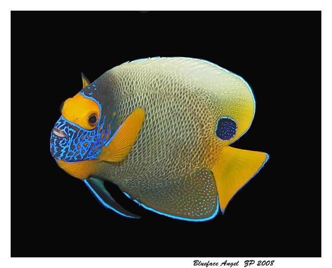 "Bio-Reef Aquariums, Jacksonville FL.  <a href=""http://www.bioreef.org"">http://www.bioreef.org</a>"