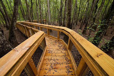 Boardwalk over Center Swamp - Leon Sinks Geological Area, Florida
