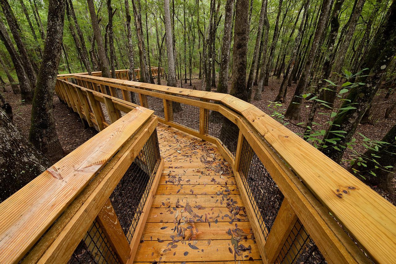 Boardwalk over Center Swamp - Leon Sinks Geological Area, Florida