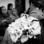 Flowers, veracruz