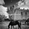 Plate # 40 , Horses and Church Ruin, Campeche - Copy