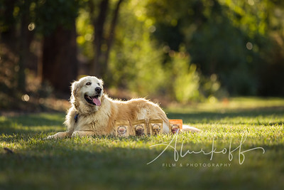 TGBB_Dog_Photography_Alurkoff-0019