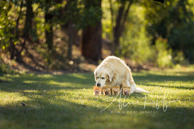 TGBB_Dog_Photography_Alurkoff-0015