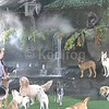Window_and_CANINE_full2