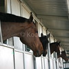 Owners and Horses Love Koolfog