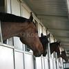 Owners and Horses Love Koolfog