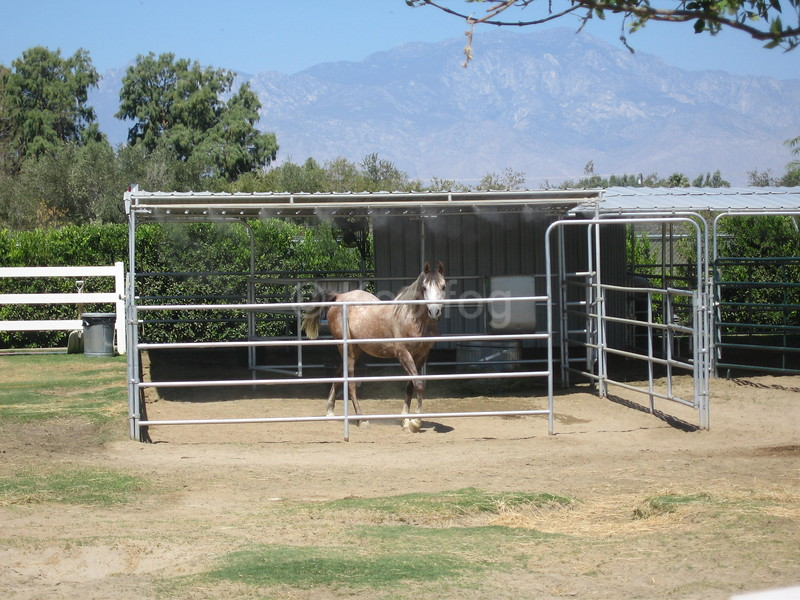 Horse Rescue Installation