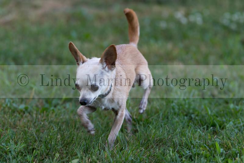 Pet photography © Lindy Martin