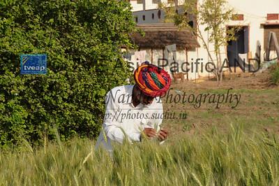 Mobile phone use in Rural Rajasthan (Village near Pushkar): Sayar Singh who stays Chamunda Matha Road, Pushkar, Rajasthan, India checking his grain and flower fields near his house.