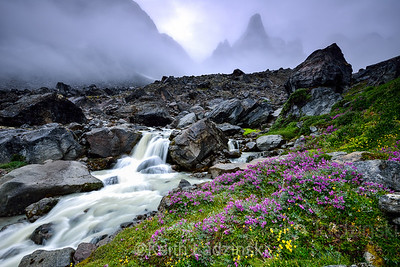 Wildflowers carpeting the floor under a foggy and ominous unnamed mountain deep in remote  eastern Greenland.
