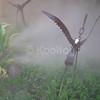 Landscape Sculpture in Fog