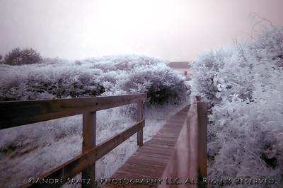 Montauk State Park- Infrared shot