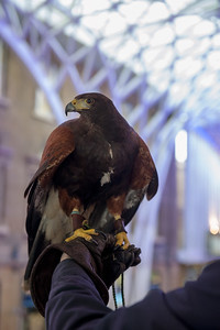 Hawk_003
