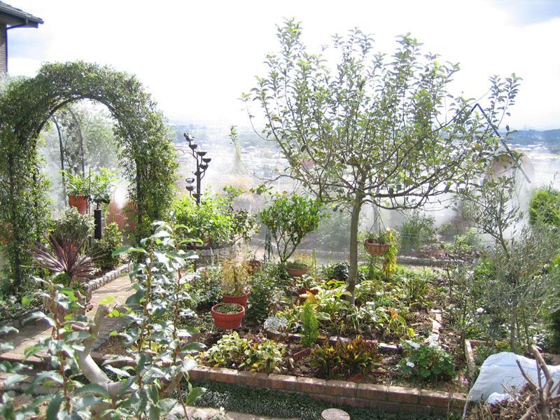 Japanese Garden Fog