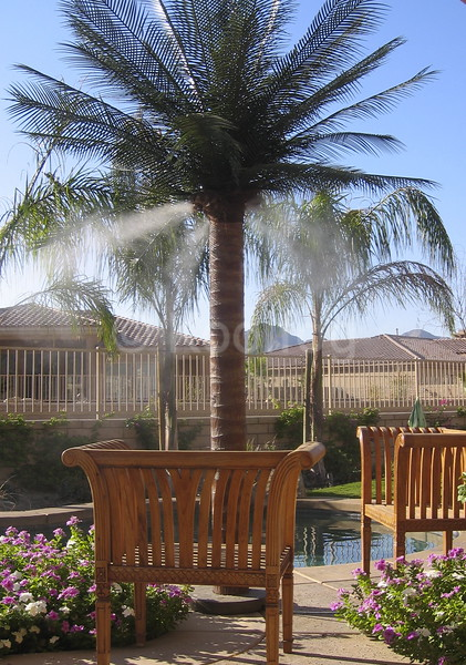 Misting Palm in Seating Area